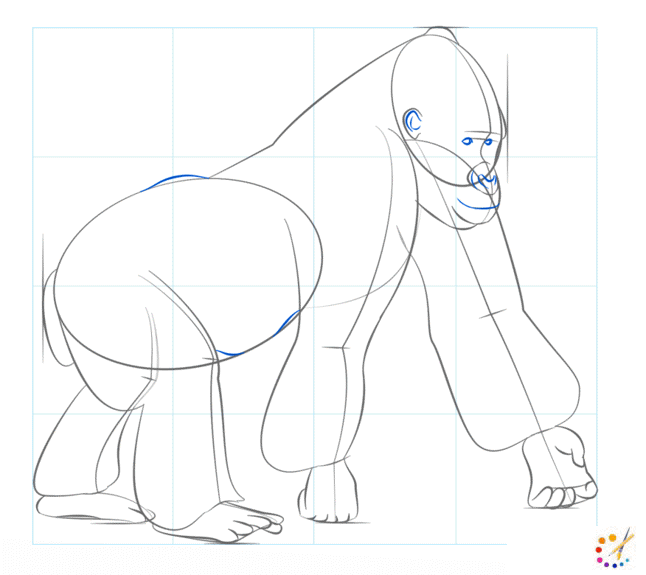 How to draw Gorilla