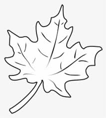 How to draw leaf