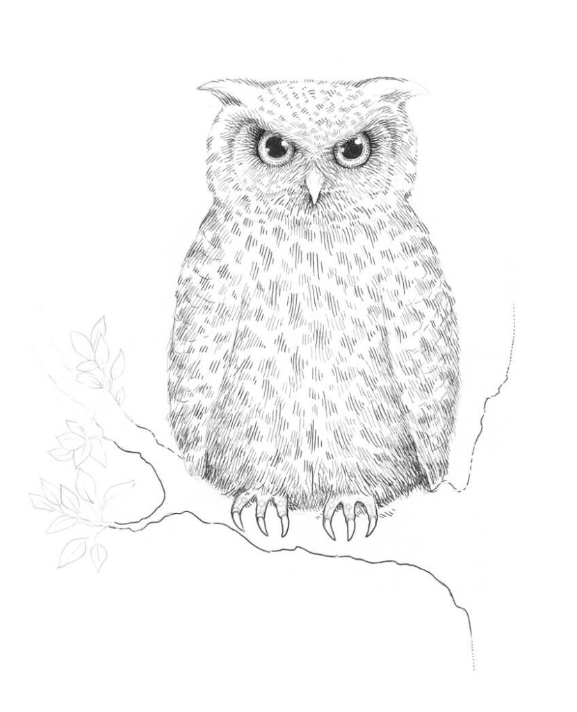 How to Draw Owl Step By Step Guide   For Kids & Beginners