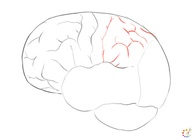 How to draw brain