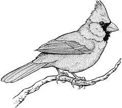 How to draw cardinal