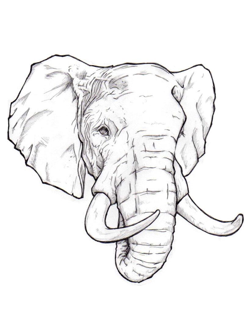 draw elephant face