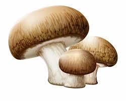 How to draw Mushroom