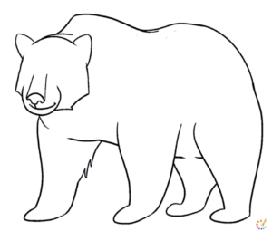 How to draw Bear