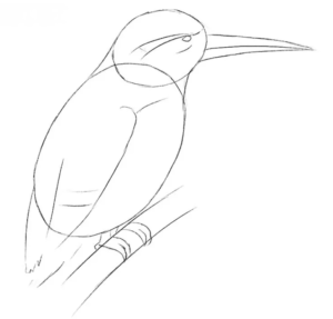 How to draw Kingfisher
