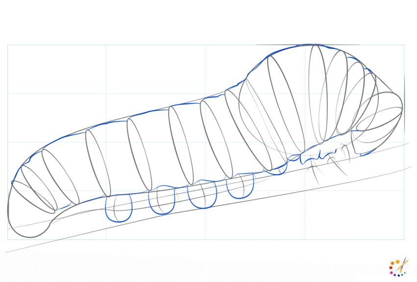 How to draw caterpillar