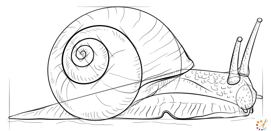 How to draw snail