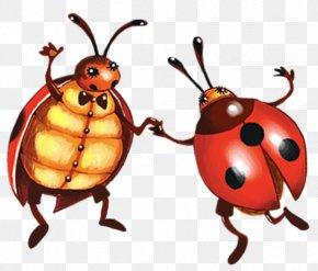 Draw Ladybug
