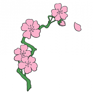 How to draw cherry blossom