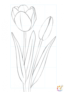How To Draw Tulip