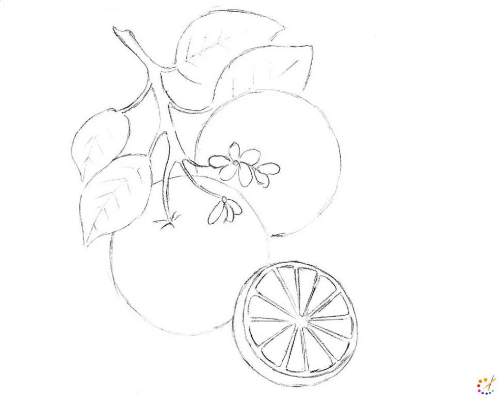 How to draw orange